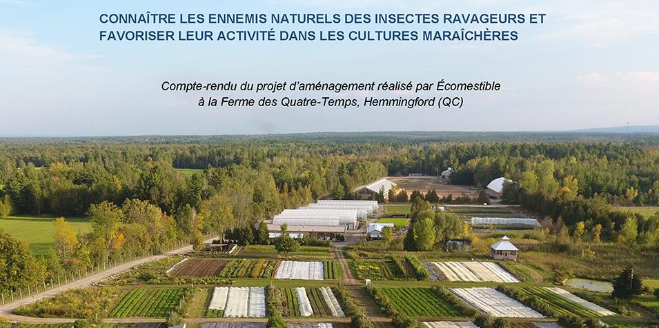 Document Connaître les ennemis naturels des insectes ravageurs et favoriser leur activité dans les cultures maraîchères