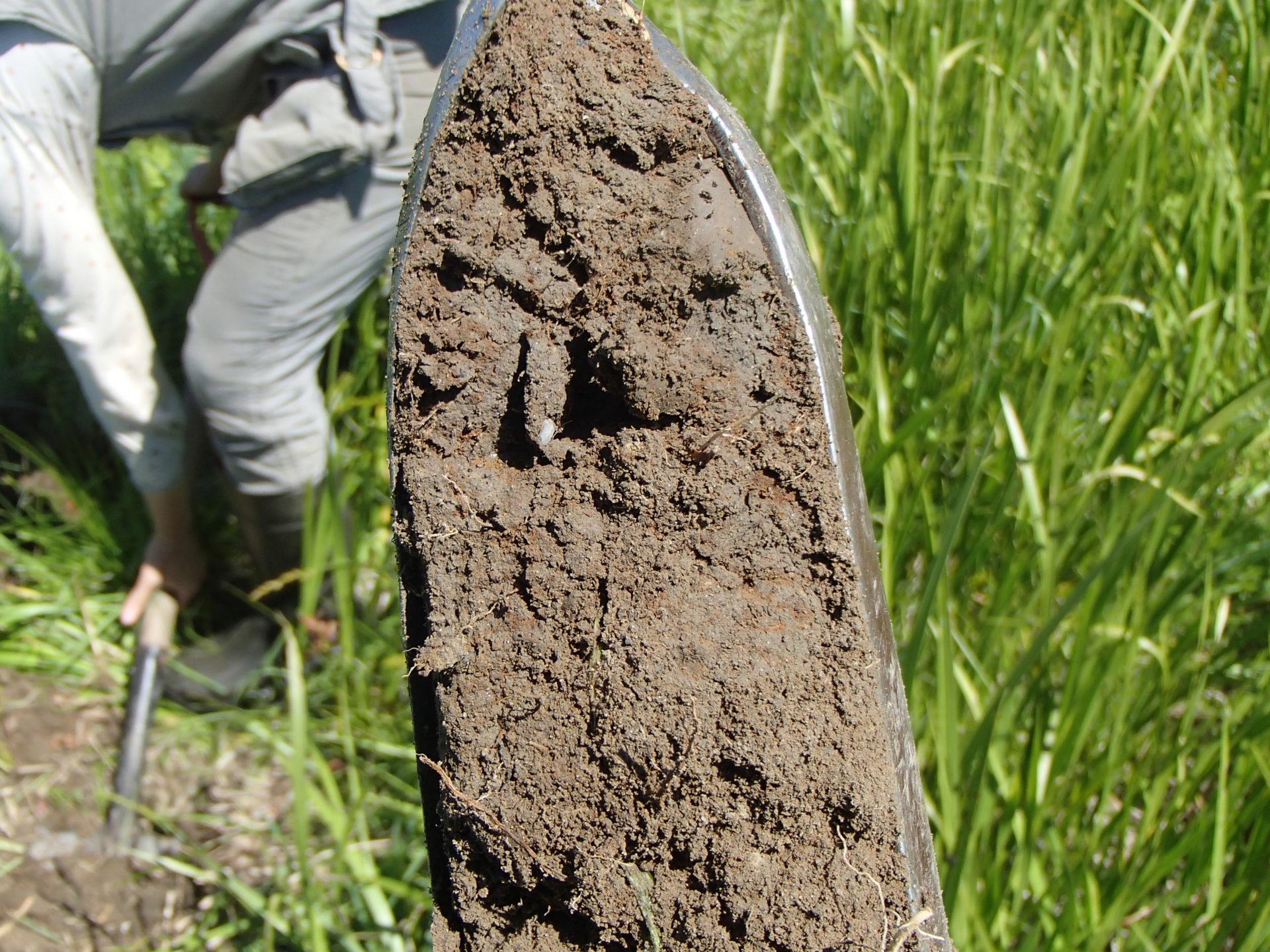 Analyse de site - caractérisation de sol