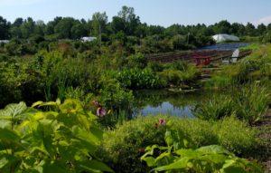 Bassin hydrique parmi les parcelles agricoles - © Écomestible